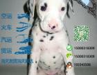 哪里有专门养斑点狗的 纯种的多少钱一只