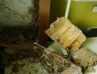 石龙灭治白蚁所 中堂白蚁防治 石排防治白蚁所 技术精湛