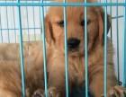 深圳养殖场 直销各种名犬 包健康包纯种 可送货