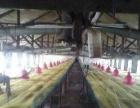 大型养殖场出兑(生产中)