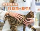 郑州持证李大夫上门打疫苗,猫三联,狂犬疫苗