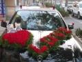 文登鲜花店市区免费配送,可先送花后付款