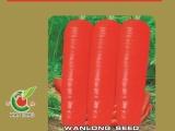 供应怡田特级三红 胡萝卜种子及各种蔬菜种