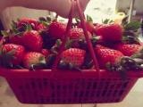顺德草莓园采摘