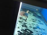 出售深深鱼缸