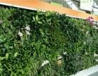植物墙、别墅绿化、假山水景