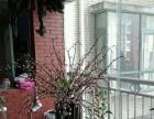 金阳新区碧海花园 碧海花园碧水 3室 2厅 125平米