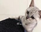 转让 驱虫疫苗都打过了 猫树猫用品赠送