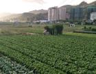 体验田间生活,品尝有机蔬菜,全天然木头房