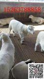 羊床 竹羊床 羊床价格 羊床价格 羊床质量好价格低