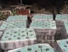 广东侨康厂家直销:彩砖、植草砖