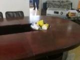 办公会议桌长4米,成色好