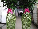 哈尔滨批发小绿萝发财树,免费送货上门
