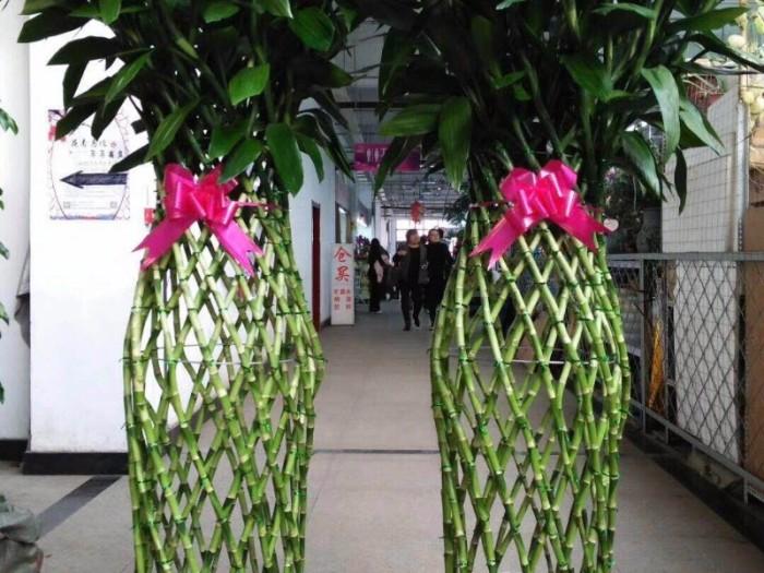 哈尔滨道里批发小绿萝发财树买花送小盆栽