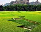 端午节武汉周边自驾游,武汉端午节去哪里玩来竹馨庄园