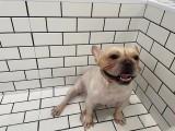 江北区宠物医院提供宠物洗澡,宠物美容,宠物医疗服务