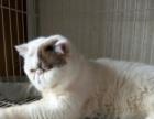 六个月加菲猫小公子