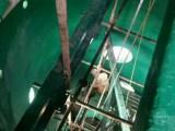 威海中温乙烯基玻璃鳞片胶泥生产厂家