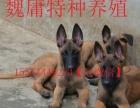比特犬、卡斯罗犬、马犬、狼青犬、金毛犬等等、魏庸特种养殖