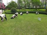 杭州滨江绿植租赁花卉销售苗木批发绿化施工