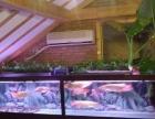 鱼缸水草造景、鱼缸清洗保洁、鱼缸托管、鱼缸维修