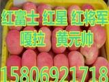 运河区冷库红富士苹果 红富士苹果价格 ..,,24N