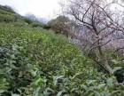 西山荣焕农家乐:洞庭西山碧螺春已上市,需要的联系哈