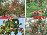 绵阳果园资产评估个体户资产评估果树价值评估果园整体资产评估
