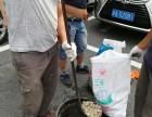 上海管道疏通清洗车租赁公司 上海各区下水道疏通 管道淤泥清洗