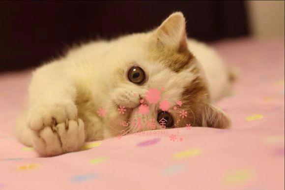 南宁哪里卖加菲猫较便宜多少钱一只 购买包健康多久