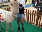 上海羊驼出租矮脚马租赁蓝孔雀出租庆典暖场展示
