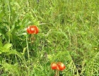 大兴安岭地区加格达奇区300000亩优天然牧草出租