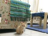 自家小猫找爱心领养