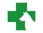 新宠到家的棘手问题,究竟如何解决-佳雯宠物医院