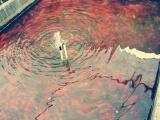 批发各类观赏鱼热带鱼锦鲤金鱼红鲫鹦鹉玉面皇冠