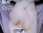 宠物兔乖巧兔可爱兔