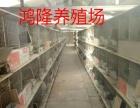 浙江肉兔价格,肉兔种兔价格养殖场