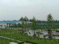 207国道与沪陕高速交叉 仓库 8000平米