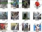 上海长兴岛环卫所抽粪/横沙岛管道清洗疏通下水道公司