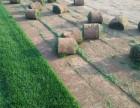 北京豐臺草坪庭院綠化帶土草坪高羊茅早熟禾混播草坪鮮花綠植供應