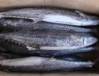 河南郑州四海美来的鲅鱼质量优,价格实惠
