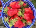 情人节到了,摘牛奶草莓自己包装送礼的来了