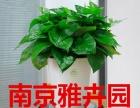 专业室内绿植租赁租摆养护更换 销售免费上门设计