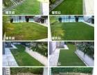 人造草坪首选森悦,婚礼场地展厅阳台楼顶均可使用