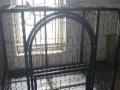 家里闲置大中型犬用铁笼一个,已消毒,便宜转!!!