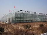 山东鲁源玻璃智能连栋温室大棚报价详情尽在青州工程公司