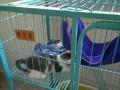 全新猫笼,诚心转让