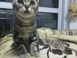 家里要二胎,爱猫便宜转,母猫一岁多!