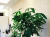 廊坊-华夏幸福城润园1室1厅-2300元