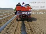 成帆农业装备蔬菜种植机